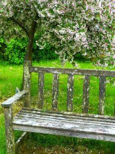Gartenbank Holz verwittert auf Wiese unter einem Obstbaum