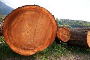 Holzart Gartenmöbel massive Baumstämme