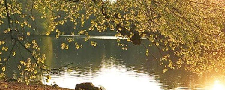Parkbank Holz am See bei Sonnenuntergang